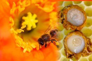 arı sütü maskesi-arı sütünün faydaları nelerdir-göz altı kırışıklıkları için maske ibrahim saraçoğlu-arı sütü faydaları ve zararları-arı sütü kremi faydaları-arı sütü fiyatı faydaları-arı sütü kullananların yorumları-arı sütü faydaları ve nasıl kullanılır-arı sütü cilt lekeleri-arı sütü kremi nasıl yapılır-arı sütü kremi fiyatı-arı sütü ciltte nasıl kullanılır-arı sütü faydaları ve kullanımı-suna dumankaya polen maskesi-arı sütü kremi eczane fiyatı-polen maskesi ve hazırlanışı-evde göz kremi hazırlama-göz altı kırışıklıkları için maske tarifi-arı sütü yararları-polen maskesi yapanlar-arı sütü maskesi kullananlar-arı sütü maskesi nasıl yapılır-nurs arı sütü kremi-probee arı sütü kremi kullananlar-arı sütünün saça faydaları-arı sütü propolis faydaları-göz altı kırışıklıkları için maske şems aslan-polen maskesi fiyat-arı poleni saç maskesi