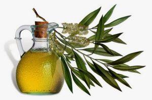Çay ağacı yağı sivilce-Çay ağacı yağı-çay ağacı yağı kremi-çay ağacı yağı kullananlar-çay ağacı yağı nasıl kullanılır-çay ağacı yağı ne işe yarar-çay ağacı yağı sabunu-çay ağacı yağı vajinada nasıl kullanılır-çay ağacı yağı kullanımı-çay ağacı yağı nelere iyi gelir-çay ağacı yağı saç-çay ağacı yağı zararları-çay ağacı yağı nerede satılır-çay ağacı yağı neye iyi gelir-çay ağacı yağı yüze nasıl kullanılır-çay ağacı yağı mantar-çay ağacı yağı satın al-çay ağacı yağı kremi faydaları-çay ağacı yağı tonik yapımı-çay ağacı yağı tırnak mantarı-çay ağacı yağı al-çay ağacı yağı eczane fiyatı-çay ağacı yağı faydaları nelerdir-çay ağacı yağı eczanede satılırmı